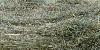 Dry hay grass Royalty Free Stock Photography