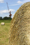 Dry hay in the meadow Stock Image