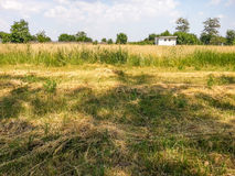 Dry hay mowed Royalty Free Stock Images