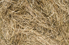 Dry hay stack texture closeup Stock Images
