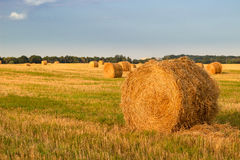 Dry hay stacks on countryside field during harvest - sunset Royalty Free Stock Images