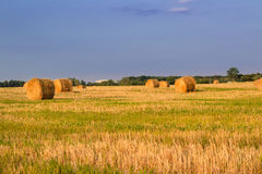 Dry hay stacks on sunset field during harvest time Stock Image