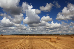 Dry hay on summer field Royalty Free Stock Photos