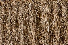 Dry hay texture Stock Image