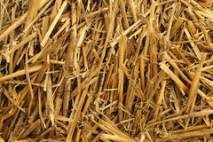 Dry hay Stock Photo