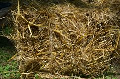 Hay as a background Royalty Free Stock Image