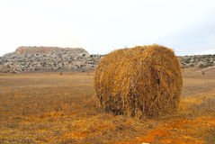 Dry haycock in a field Royalty Free Stock Photos