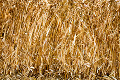 Dry Haystack background Royalty Free Stock Photo