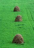Dry haystacks Royalty Free Stock Photos