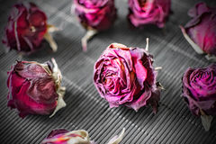 Dry heads of purple roses on a black background. Dark Background with Flowers Royalty Free Stock Photography
