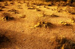 Dry Heat. Summer heat burning the ground in arizona Royalty Free Stock Photography