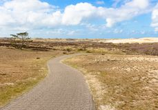 Dry heathland and dunes in north holland. bicycle way leading through the scenery. Dry heathland and dunes in north holland. bicycle way leading through the Royalty Free Stock Image