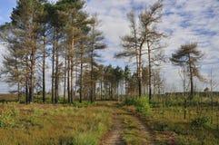 Dry Heathland Stock Photography