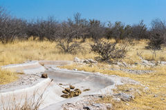 Dry Helio waterhole in Etosha. Dry artificial Helio waterhole in Etosha national park Royalty Free Stock Photography