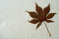 Dry Hemp leaf. On a natural fabric background Stock Photo