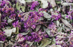 Dry herb Origanum vulgare Stock Photo