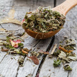 Dry herb tea in wood spoon Stock Photography