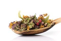 Herbal tea. stock photos