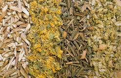 Dry herbals. Different medicinal herbs -  dry hop, willow bark, calendula, viburnum bark Royalty Free Stock Photography