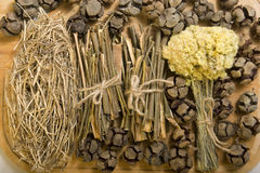 Dry herbals Stock Photography