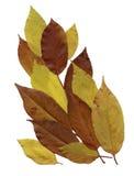 Dry herbarium leaves on background. Stock Photos
