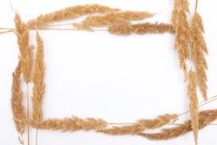 Dry herbs frame Stock Photos