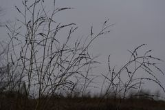 Dry herbs in late autumn. Silhouettes of plants on the sky background stock images