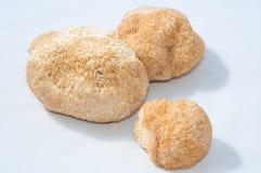 Dry Hericium erinaceus Stock Photo