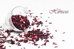 Dry hibiscus Royalty Free Stock Image