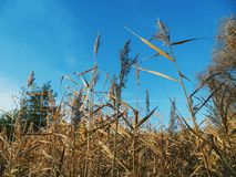 dry high grass, autumn Stock Photo