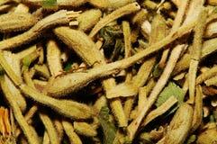 Dry Honeysuckle. Chinese traditional medicine, dry honeysuckle, macro 1:1 royalty free stock photography