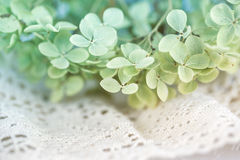 Dry hortensia flower Royalty Free Stock Photography
