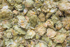 Dry hops flowers Stock Images