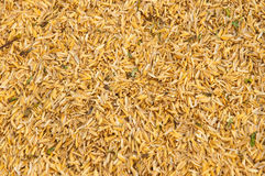 Dry husk Royalty Free Stock Images