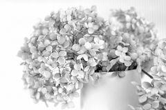 Dry hydrangea petals bouquet Royalty Free Stock Images