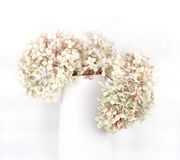 Dry hydrangea petals bouquet Stock Photos