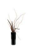 Dry ikebana Stock Images