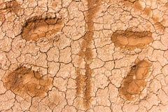 Dry knäckte jord av texturen Royaltyfri Fotografi