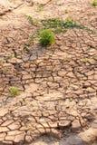 Dry knäckte jord, men det finns att växa för liv. Royaltyfri Fotografi
