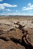 Dry lake. Stock Photo