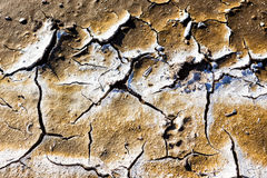 Dry lake bed with natural texture of cracked clay in perspective Stock Photography