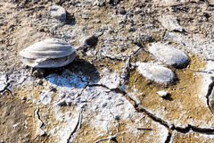 Dry lake bed with natural texture of cracked clay in perspective Stock Image