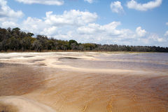 Dry lake in a Central Flodida State park. The Lake at Lake Louise State park Central Florida very low on water Royalty Free Stock Photography