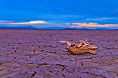 Dry Lake in Death Valley Royalty Free Stock Photo