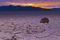 Dry Lake in Death Valley Stock Images