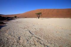 A dry lake Sossusvlei, Namibia, Africa Royalty Free Stock Image