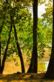 Dry Lake In Summer Forest Royalty Free Stock Photo