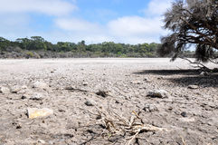 Dry Lakebed Landscape. Drought with dried lake bed in wetland environment bordered by green trees under a blue sky with clouds at Manning Lake in Hamilton Hill Stock Image