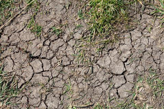 Dry land. Infertile ground with cracks caused by dry weather Royalty Free Stock Photos