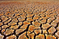 Dry Land. Cracked and dried soil under a hot sunlight stock image